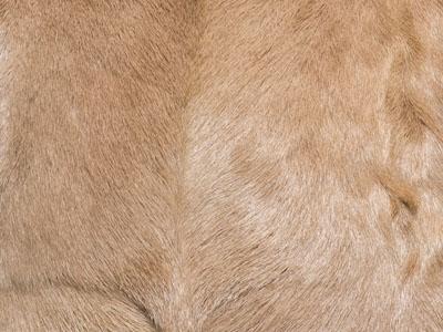 Goatskin Cushions color swatch beige