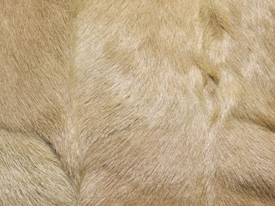 Goat Skin Hide color swatch wheat