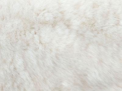 Rabbit Fur Plate color swatch white